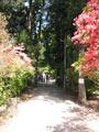 path_to_shrine_thumb